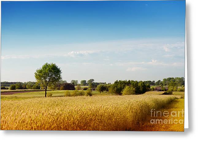 Rural Wheat Field View Greeting Card by Arletta Cwalina