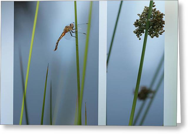 Rushes And Dragonfly Greeting Card