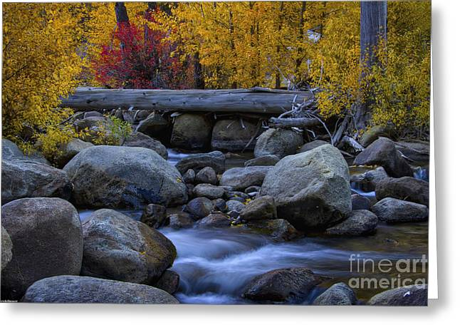 Rushing Into Autumn Greeting Card