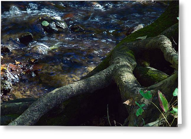 Greeting Card featuring the photograph Rushing Waters Of Life by Wanda Brandon