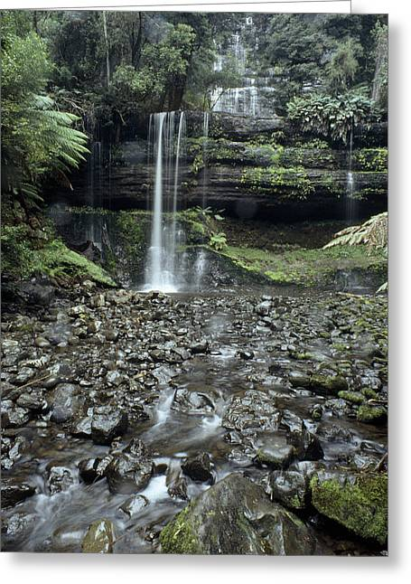 Woodland Views Greeting Cards - Russell Falls Cascade Through A Cool Greeting Card by Jason Edwards