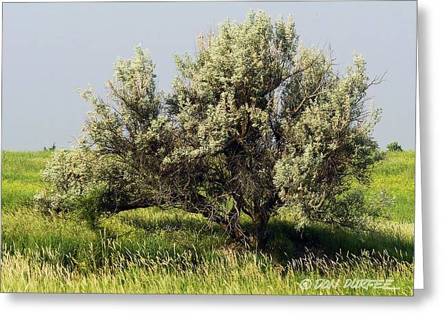 Greeting Card featuring the photograph Russian Olive On The Prairie by Don Durfee