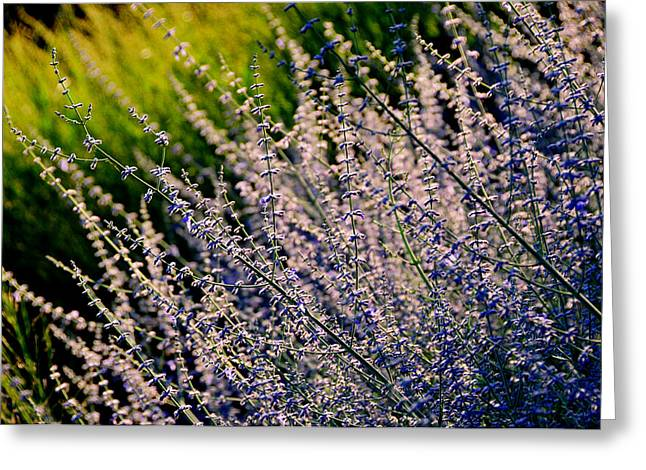 Russian Sage Greeting Card by Lyle  Huisken