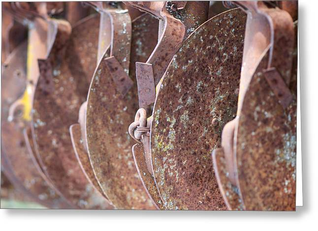 Rusted Blades Greeting Card by Lisa Knechtel