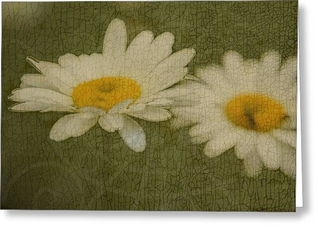 Rustic Daisies Greeting Card by Tingy Wende