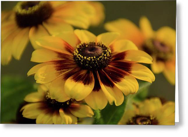 Toto Greeting Cards - Rustic Rudbeckia Greeting Card by Maria Suhr