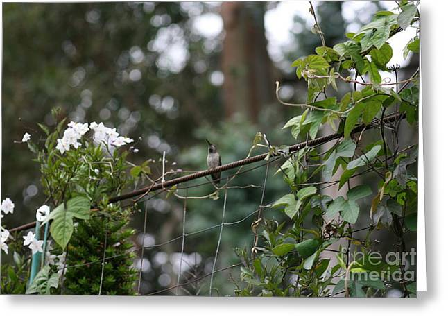 Greeting Card featuring the photograph Rustic Serenity by Cynthia Marcopulos
