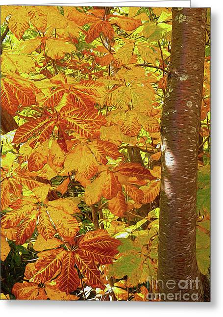 Rusty Autumn Fall Color Leaves In The Blue Ridge Ap Greeting Card by Dan Carmichael