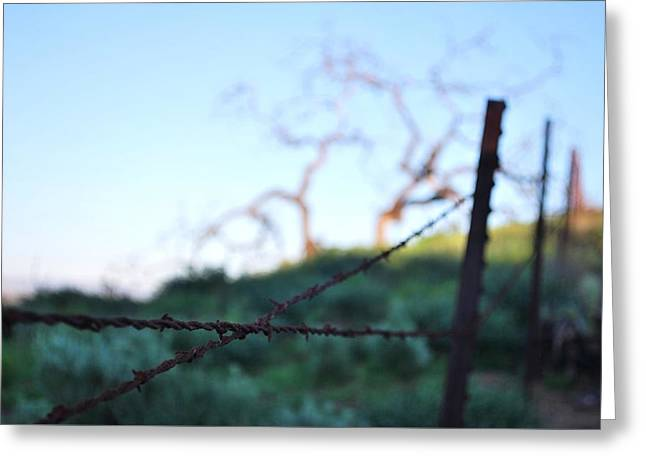Greeting Card featuring the photograph Rusty Gate Rural Tree 2 by Matt Harang