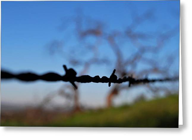 Greeting Card featuring the photograph Rusty Gate Rural Tree by Matt Harang
