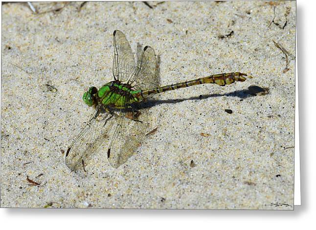 Greeting Card featuring the photograph Rusty Snaketail by Sally Sperry