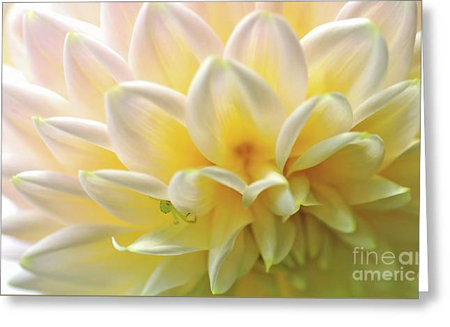 Rythmic Petals - Dahlia Greeting Card