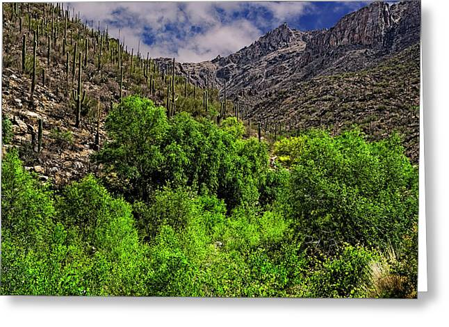 Greeting Card featuring the photograph Sabino Canyon H33 by Mark Myhaver