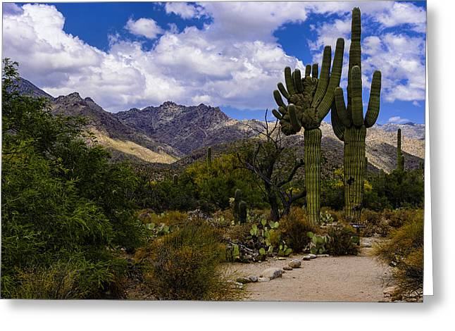 Greeting Card featuring the photograph Sabino Canyon No4 by Mark Myhaver