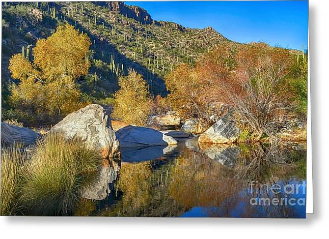 Sabino Canyon Reflecting Pool Fall Colors Hdr Greeting Card by Rincon Road Photography By Ben Petersen