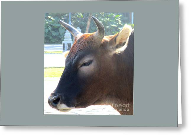 Sacred Cow 4 Greeting Card by Randall Weidner