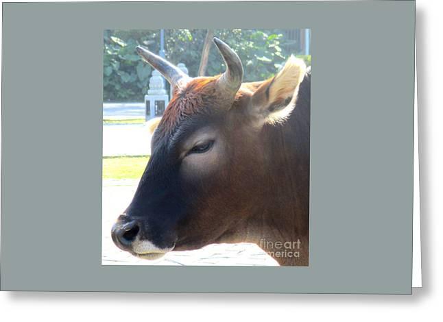 Sacred Cow 4 Greeting Card