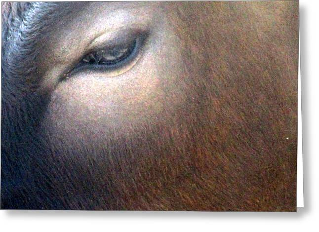 Sacred Cow 5 Greeting Card by Randall Weidner