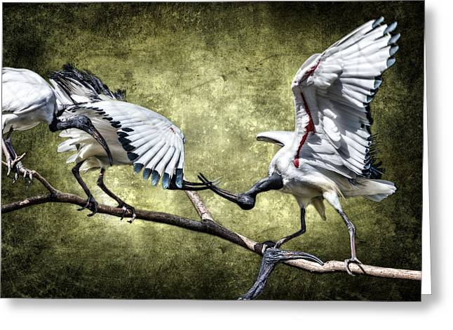 Sacred Ibis Photobombing D0164 Greeting Card by Wes and Dotty Weber