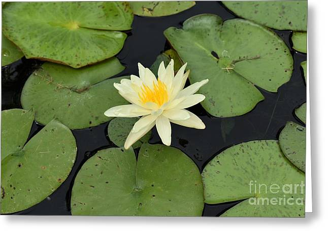 Greeting Card featuring the photograph Sacred Lotus by James Fannin