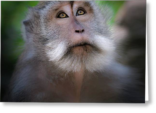 Sacred Monkey Forest Sanctuary Greeting Card by Larry Marshall