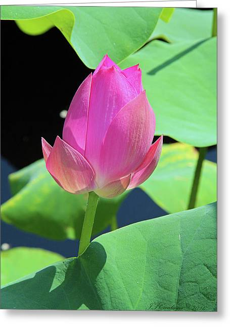 Sacred Pink Greeting Card