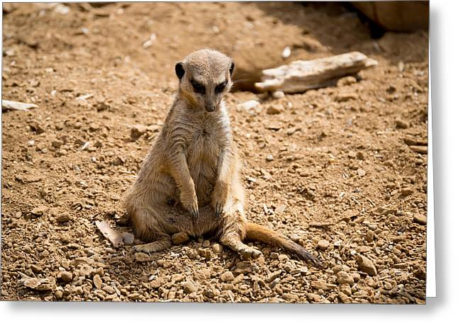 Greeting Card featuring the photograph Sad Meerkat by Scott Lyons