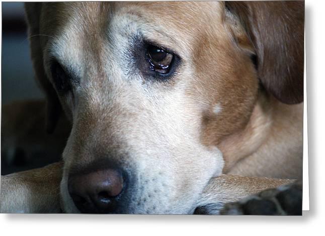 Sad Pup Greeting Card