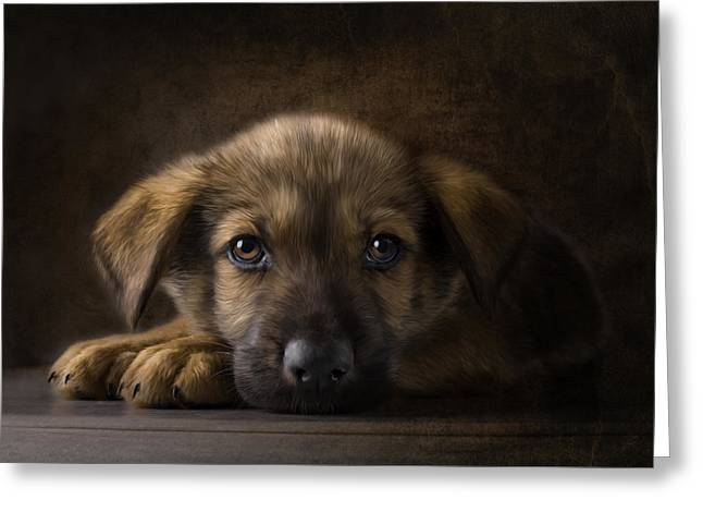 Puppy Digital Greeting Cards - Sad Puppy Greeting Card by Bob Nolin