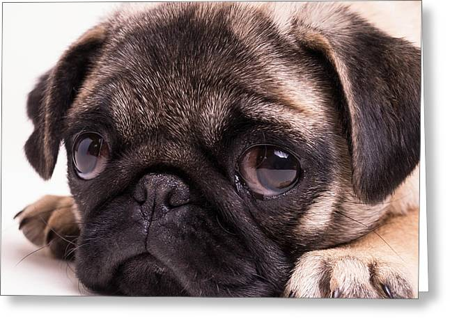 Sad Sack - Pug Puppy Greeting Card by Edward Fielding
