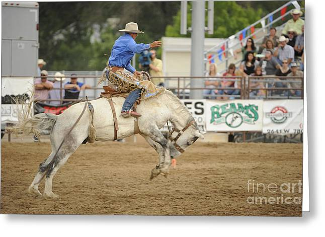 Saddle Bronc Greeting Card by Dennis Hammer