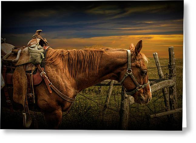 Saddle Horse On The Prairie Greeting Card