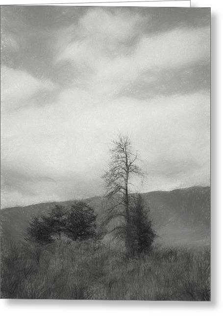 Sage And Tree Sketch Black And White Greeting Card