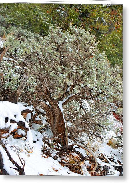 Greeting Card featuring the photograph Sage Brush Williams Arizona by Donna Greene
