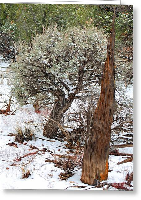Greeting Card featuring the photograph Sage Bush Grand Canyon by Donna Greene