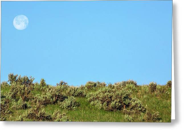 Sage Moon Greeting Card by Todd Klassy