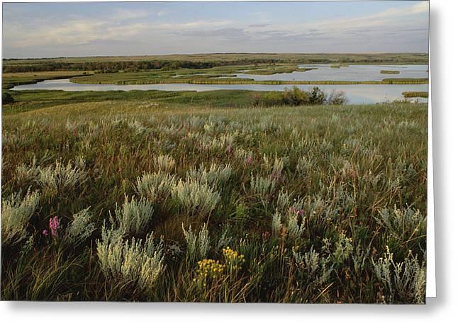 Sage Prairie And Marsh In Upper Souris Greeting Card by Gerry Ellis