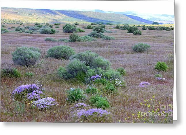Sagebrush And Wildflowers Greeting Card by Carol Groenen
