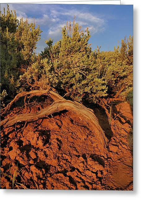 Sagebrush At Sunset Greeting Card