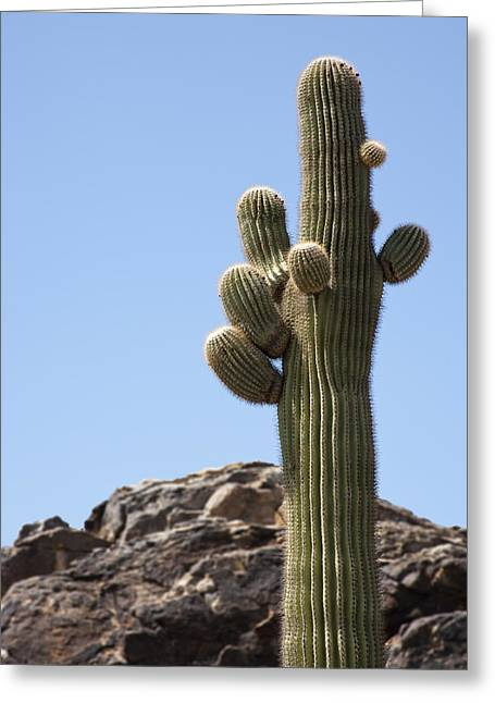 Saguaro 1 Greeting Card by Kelley King