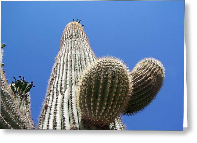 Saguaro 2 Greeting Card by Travis Wilson