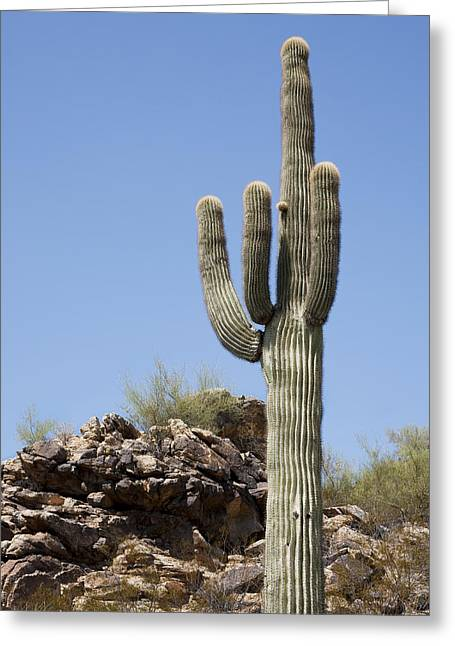 Saguaro 3 Greeting Card by Kelley King
