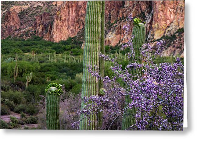 Saguaro An Purple Ironwood Beauty Greeting Card