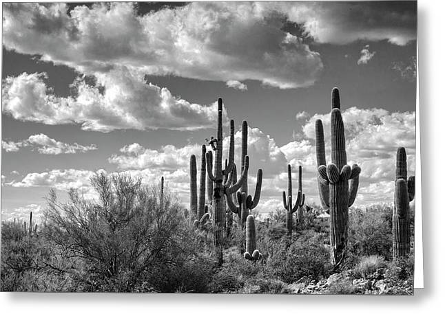 Greeting Card featuring the photograph Saguaro And Blue Skies Ahead In Black And White  by Saija Lehtonen