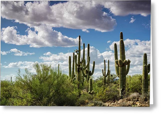 Greeting Card featuring the photograph Saguaro And Blue Skies Ahead  by Saija Lehtonen