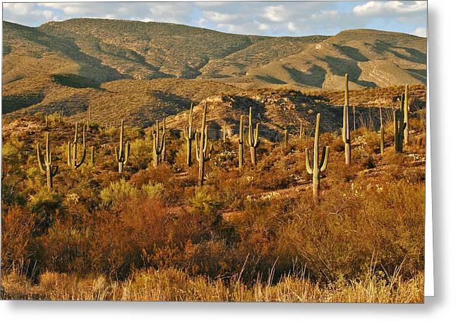 Saguaro Cactus - A Very Unusual Looking Tree Of The Desert Greeting Card