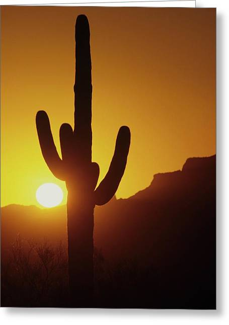 Saguaro Cactus And Sunset Greeting Card