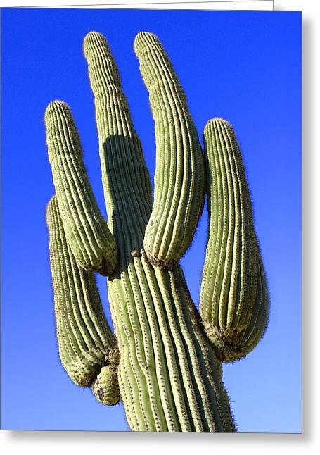 Saguaro Cactus - Arizona Greeting Card by Mike McGlothlen
