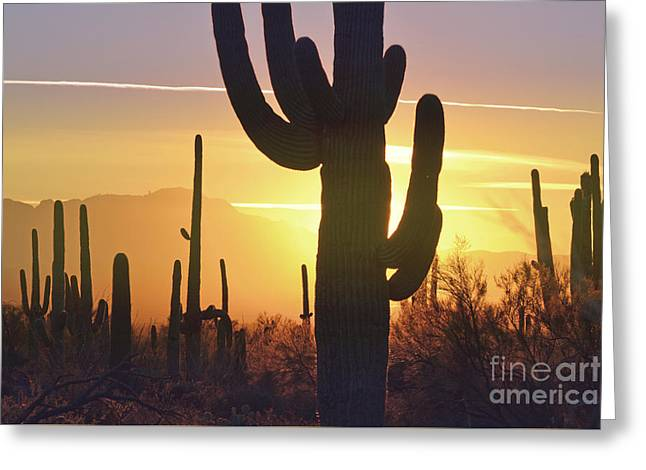 Saguaro Cactus Golden Sunset Mountain Greeting Card by Andrea Hazel Ihlefeld