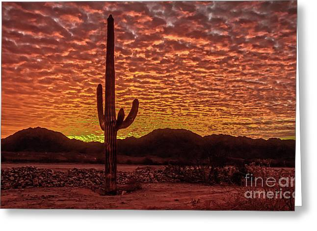Saguaro Cactus  Sunrise Greeting Card